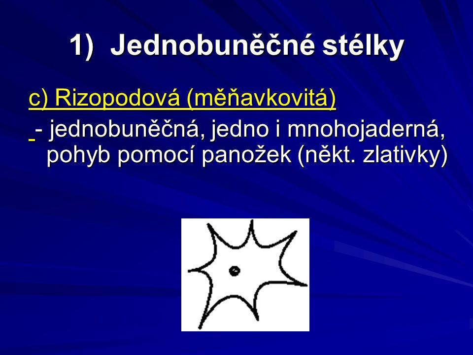 2) Mnohobuněčné stélky 2) Mnohobuněčné stélky a) Trichální - mnohobuněčná, vláknitá, buňky jsou jednojaderné s buněčnou stěnou, vlákna nevětvená, či jednoduše větvená - mnohobuněčná, vláknitá, buňky jsou jednojaderné s buněčnou stěnou, vlákna nevětvená, či jednoduše větvená