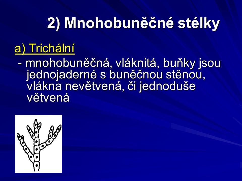 2) Mnohobuněčné stélky 2) Mnohobuněčné stélky a) Trichální - mnohobuněčná, vláknitá, buňky jsou jednojaderné s buněčnou stěnou, vlákna nevětvená, či j