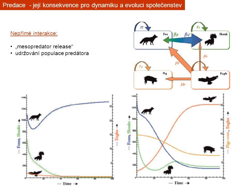 """Nepřímé interakce: """"mesopredator release"""" udržování populace predátora Predace - její konsekvence pro dynamiku a evoluci společenstev"""