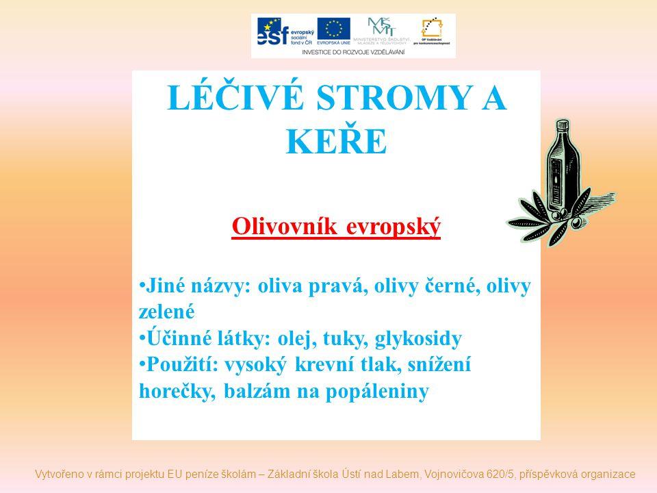 LÉČIVÉ STROMY A KEŘE Olivovník evropský Jiné názvy: oliva pravá, olivy černé, olivy zelené Účinné látky: olej, tuky, glykosidy Použití: vysoký krevní