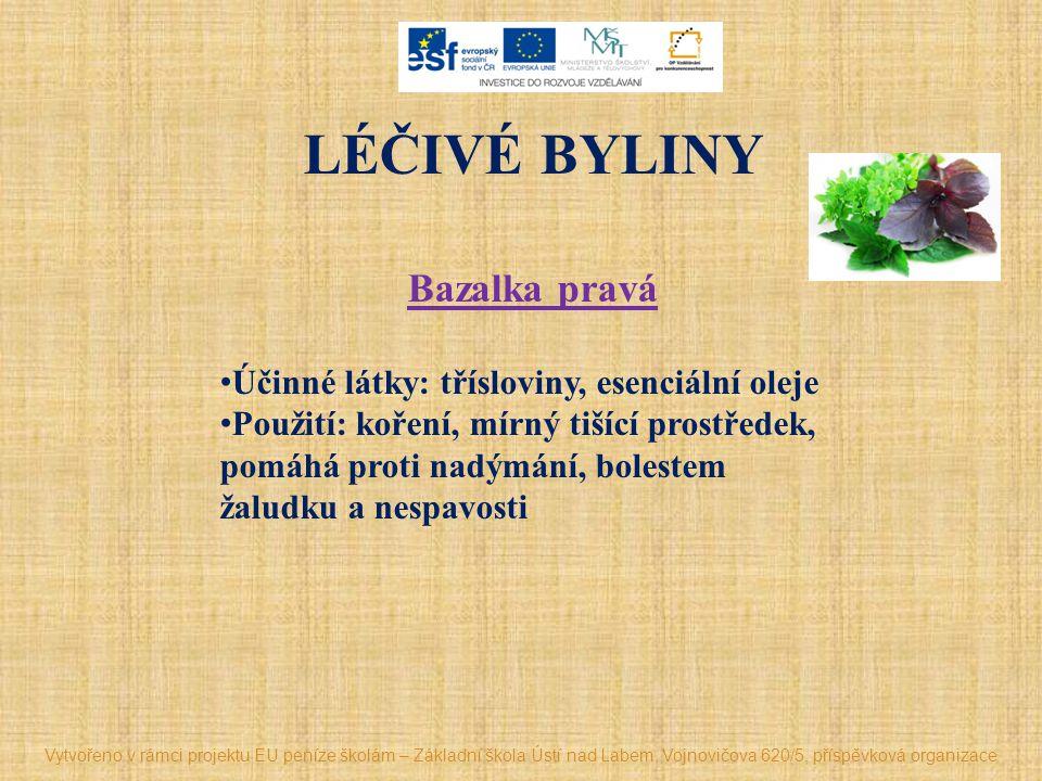 LÉČIVÉ BYLINY Bazalka pravá Účinné látky: třísloviny, esenciální oleje Použití: koření, mírný tišící prostředek, pomáhá proti nadýmání, bolestem žalud