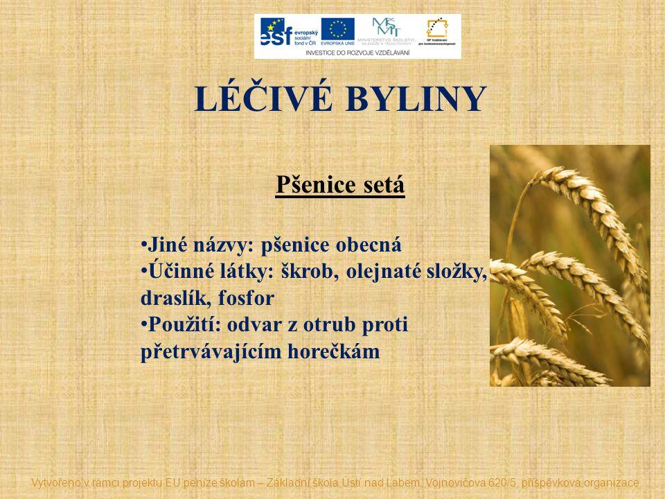 LÉČIVÉ BYLINY Pšenice setá Jiné názvy: pšenice obecná Účinné látky: škrob, olejnaté složky, draslík, fosfor Použití: odvar z otrub proti přetrvávající