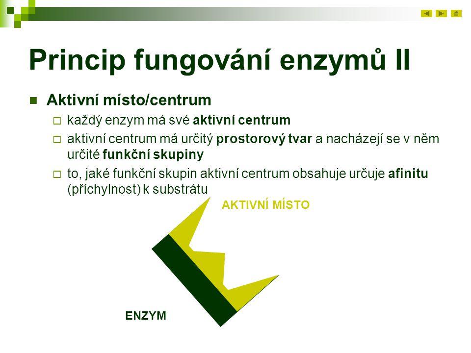 Princip fungování enzymů II Aktivní místo/centrum  každý enzym má své aktivní centrum  aktivní centrum má určitý prostorový tvar a nacházejí se v něm určité funkční skupiny  to, jaké funkční skupin aktivní centrum obsahuje určuje afinitu (příchylnost) k substrátu ENZYM AKTIVNÍ MÍSTO