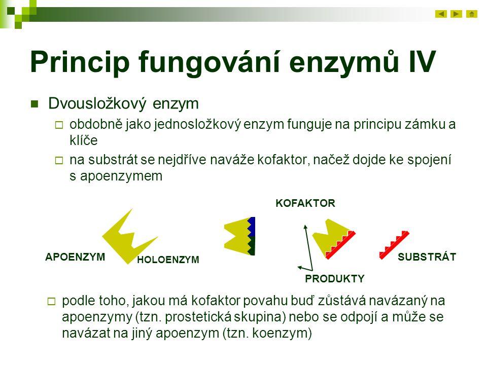 Princip fungování enzymů IV Dvousložkový enzym  obdobně jako jednosložkový enzym funguje na principu zámku a klíče  na substrát se nejdříve naváže kofaktor, načež dojde ke spojení s apoenzymem APOENZYMSUBSTRÁT KOFAKTOR PRODUKTY HOLOENZYM  podle toho, jakou má kofaktor povahu buď zůstává navázaný na apoenzymy (tzn.
