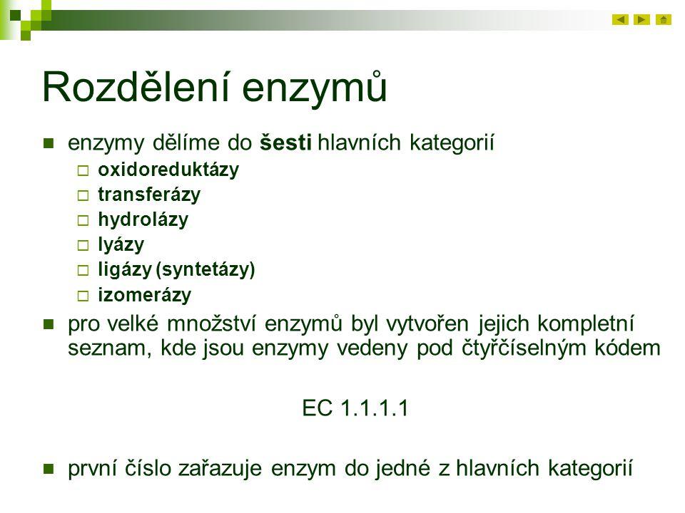 Rozdělení enzymů enzymy dělíme do šesti hlavních kategorií  oxidoreduktázy  transferázy  hydrolázy  lyázy  ligázy (syntetázy)  izomerázy pro velké množství enzymů byl vytvořen jejich kompletní seznam, kde jsou enzymy vedeny pod čtyřčíselným kódem EC 1.1.1.1 první číslo zařazuje enzym do jedné z hlavních kategorií