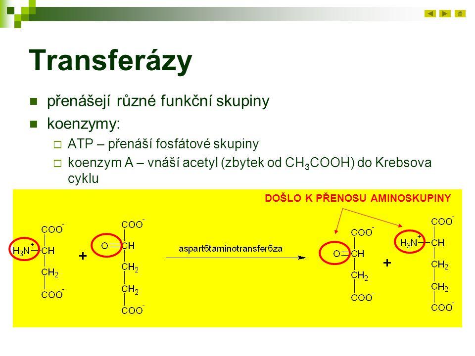 Transferázy přenášejí různé funkční skupiny koenzymy:  ATP – přenáší fosfátové skupiny  koenzym A – vnáší acetyl (zbytek od CH 3 COOH) do Krebsova cyklu DOŠLO K PŘENOSU AMINOSKUPINY