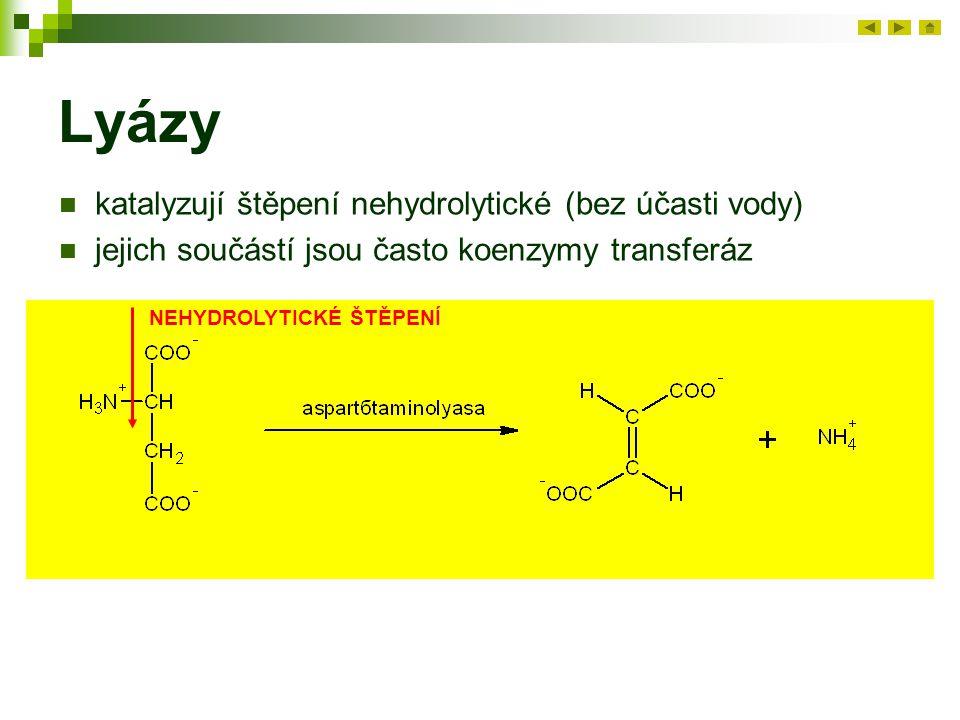 Lyázy katalyzují štěpení nehydrolytické (bez účasti vody) jejich součástí jsou často koenzymy transferáz NEHYDROLYTICKÉ ŠTĚPENÍ