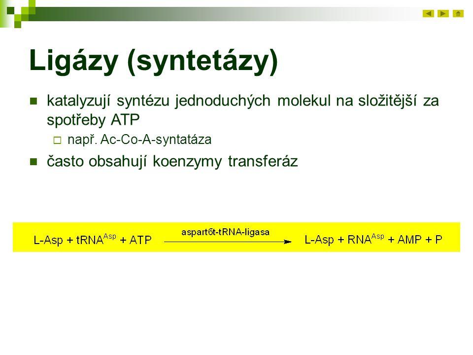 Ligázy (syntetázy) katalyzují syntézu jednoduchých molekul na složitější za spotřeby ATP  např. Ac-Co-A-syntatáza často obsahují koenzymy transferáz