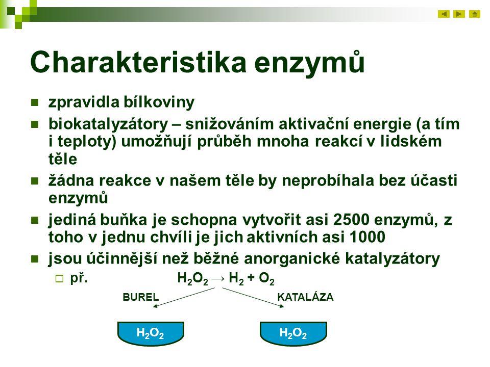 Charakteristika enzymů zpravidla bílkoviny biokatalyzátory – snižováním aktivační energie (a tím i teploty) umožňují průběh mnoha reakcí v lidském těle žádna reakce v našem těle by neprobíhala bez účasti enzymů jediná buňka je schopna vytvořit asi 2500 enzymů, z toho v jednu chvíli je jich aktivních asi 1000 jsou účinnější než běžné anorganické katalyzátory  př.