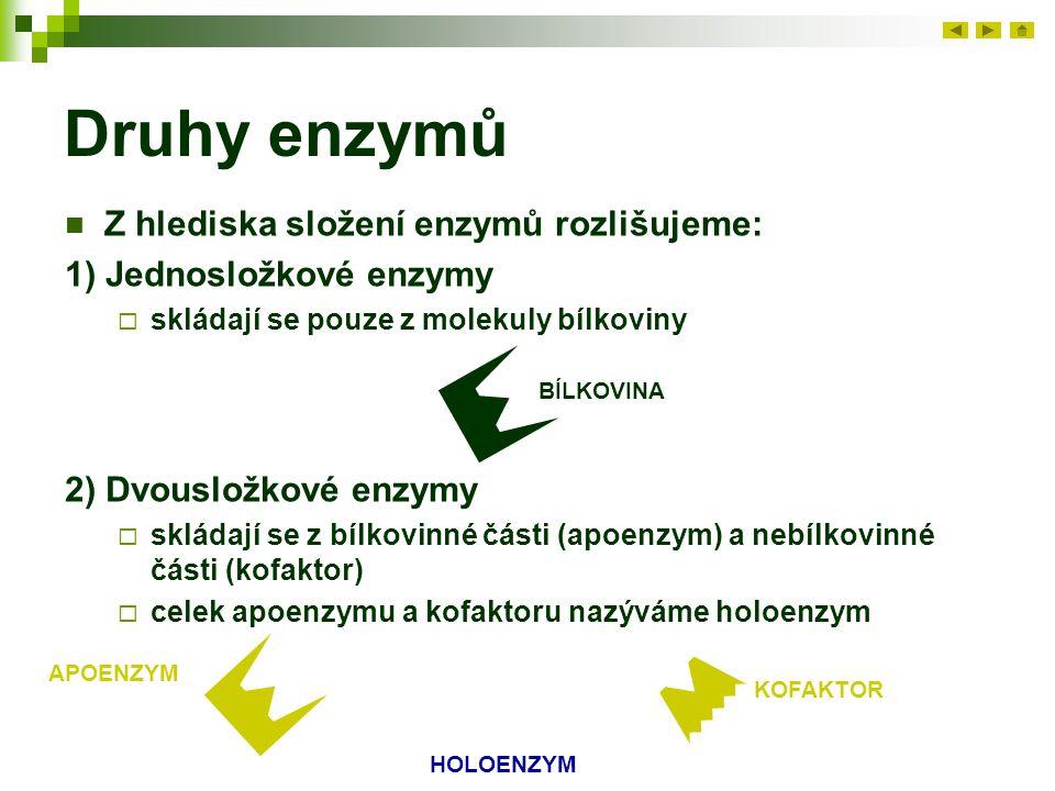 Druhy enzymů Z hlediska složení enzymů rozlišujeme: 1) Jednosložkové enzymy  skládají se pouze z molekuly bílkoviny BÍLKOVINA 2) Dvousložkové enzymy  skládají se z bílkovinné části (apoenzym) a nebílkovinné části (kofaktor)  celek apoenzymu a kofaktoru nazýváme holoenzym APOENZYM KOFAKTOR HOLOENZYM