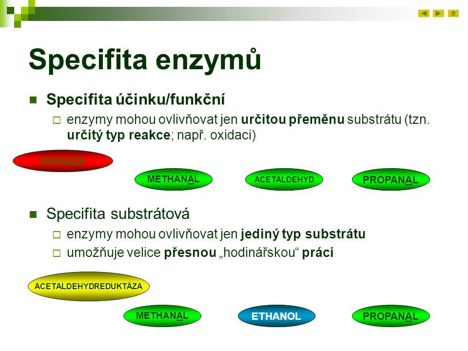 Specifita enzymů Specifita účinku/funkční  enzymy mohou ovlivňovat jen určitou přeměnu substrátu (tzn. určitý typ reakce; např. oxidaci) Specifita su