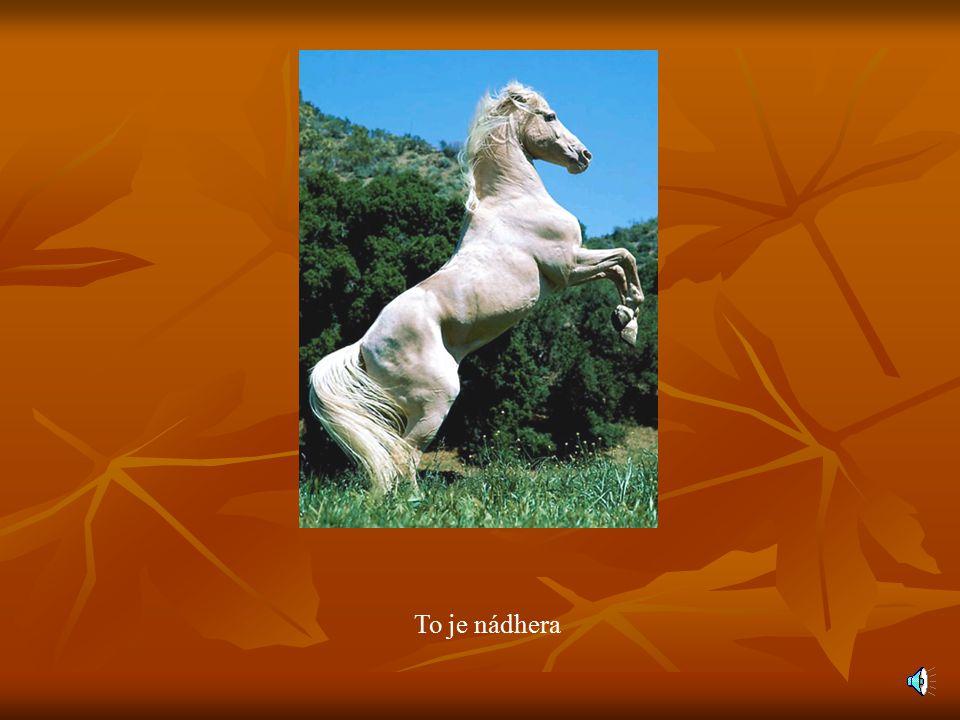 Naše nabídka Máme moc nabídek. Máme moc nabídek. Přijďte a vyberete si….