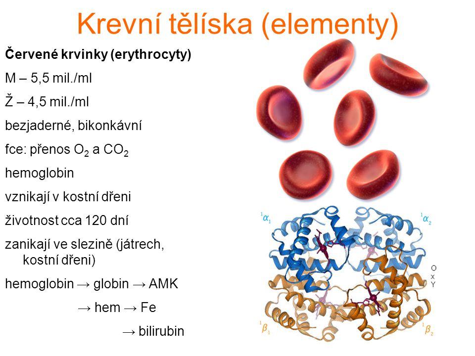 Červené krvinky (erythrocyty) M – 5,5 mil./ml Ž – 4,5 mil./ml bezjaderné, bikonkávní fce: přenos O 2 a CO 2 hemoglobin vznikají v kostní dřeni životnost cca 120 dní zanikají ve slezině (játrech, kostní dřeni) hemoglobin → globin → AMK → hem → Fe → bilirubin