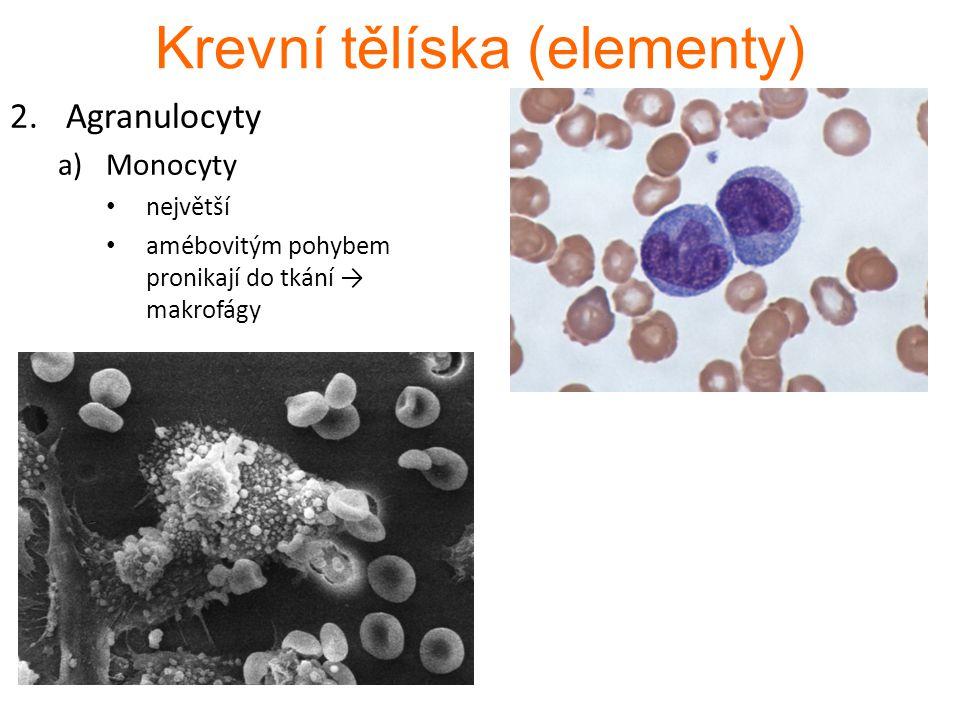 Krevní tělíska (elementy) 2.Agranulocyty a)Monocyty největší amébovitým pohybem pronikají do tkání → makrofágy