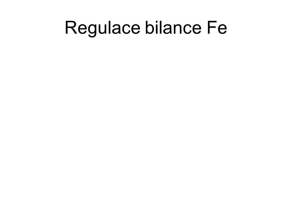 Regulace bilance Fe