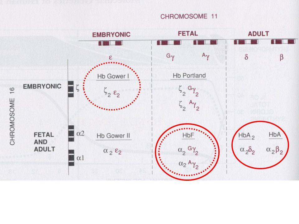 Srpkovitá anémie Mutace v kodonu kódujícím 6.aminokyselinu β globinového řetězce.