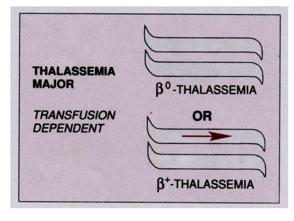 HPFH Hereditary persistence of fetal hemoglobin Bez klinických příznaků Možnost léčby thalasemií