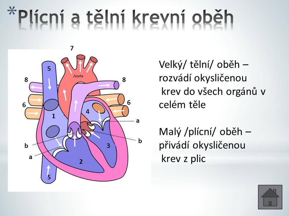1 2 3 4 b b a a 5 5 6 6 7 88 Velký/ tělní/ oběh – rozvádí okysličenou krev do všech orgánů v celém těle Malý /plícní/ oběh – přivádí okysličenou krev