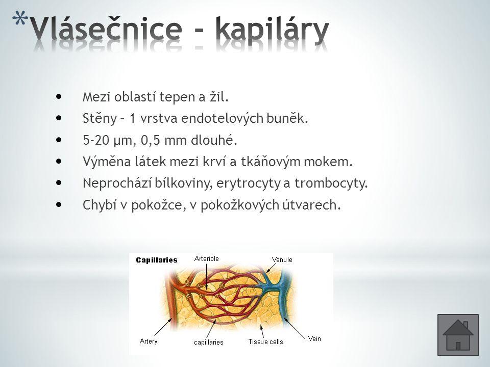 Mezi oblastí tepen a žil. Stěny – 1 vrstva endotelových buněk. 5-20 μm, 0,5 mm dlouhé. Výměna látek mezi krví a tkáňovým mokem. Neprochází bílkoviny,