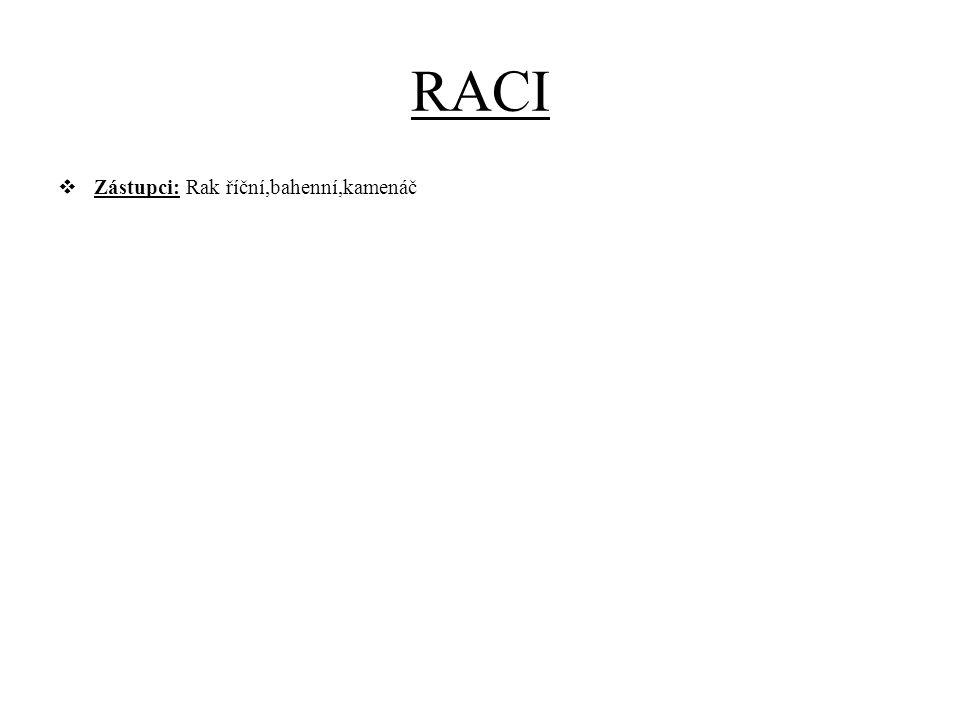 RACI  Zástupci: Rak říční,bahenní,kamenáč