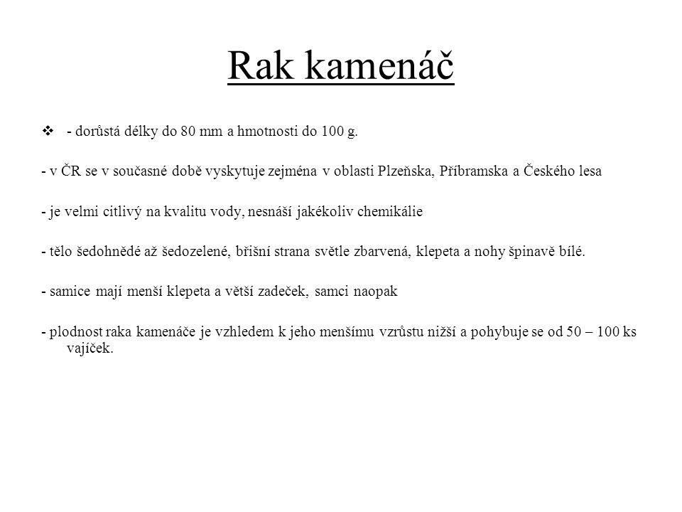 Rak kamenáč  - dorůstá délky do 80 mm a hmotnosti do 100 g. - v ČR se v současné době vyskytuje zejména v oblasti Plzeňska, Příbramska a Českého lesa