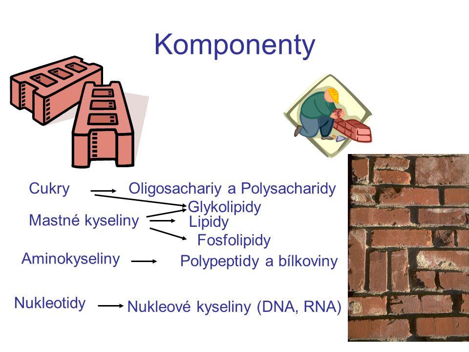 Komponenty CukryOligosachariy a Polysacharidy Mastné kyseliny Lipidy Aminokyseliny Polypeptidy a bílkoviny Nukleotidy Nukleové kyseliny (DNA, RNA) Fos