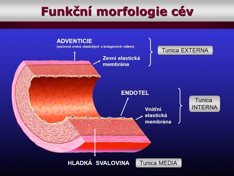 ENDOTEL HLADKÁ SVALOVINA Tunica EXTERNA ADVENTICIE (vazivová vrstva elastických a kolagenních vláken) Zevní elastická membrána Tunica MEDIA Vnitřní el