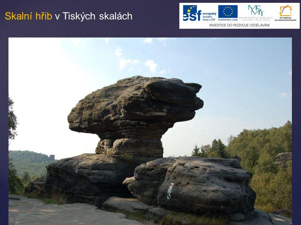 Skalní hřib v Tiských skalách
