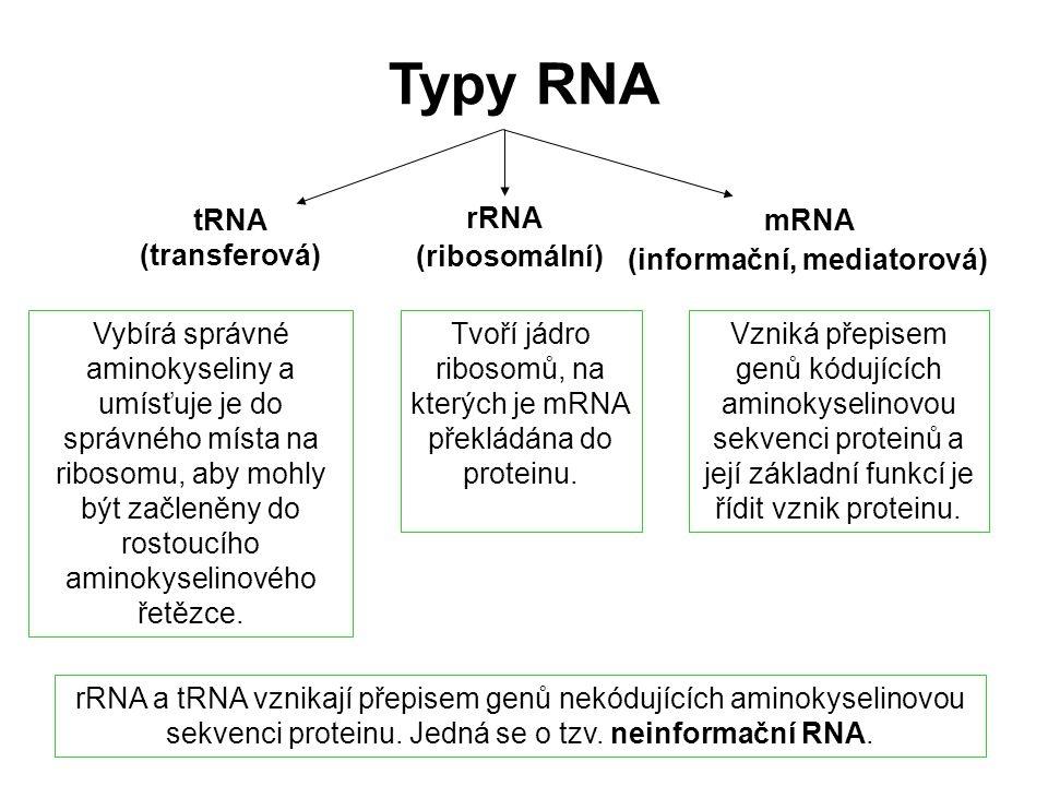 mRNA rRNA tRNA Vzniká přepisem genů kódujících aminokyselinovou sekvenci proteinů a její základní funkcí je řídit vznik proteinu. Tvoří jádro ribosomů
