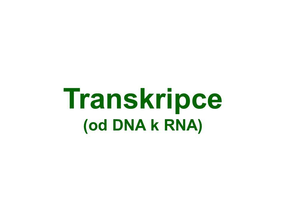 Transkripce (od DNA k RNA)