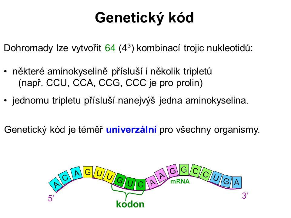 Dohromady lze vytvořit 64 (4 3 ) kombinací trojic nukleotidů: některé aminokyselině přísluší i několik tripletů (např. CCU, CCA, CCG, CCC je pro proli