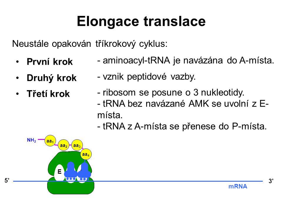 EPA 5' 3' mRNA aa 3 aa 2 aa 1 NH 2 aa 4 Elongace translace Neustále opakován tříkrokový cyklus: První krok Druhý krok Třetí krok - aminoacyl-tRNA je n