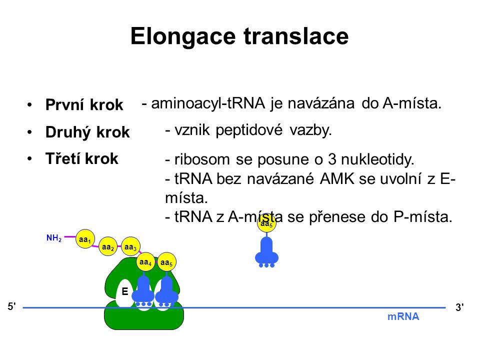 EPA 5' 3' mRNA aa 3 aa 2 aa 1 NH 2 aa 4 aa 5 Elongace translace První krok Druhý krok Třetí krok - ribosom se posune o 3 nukleotidy. - tRNA bez naváza
