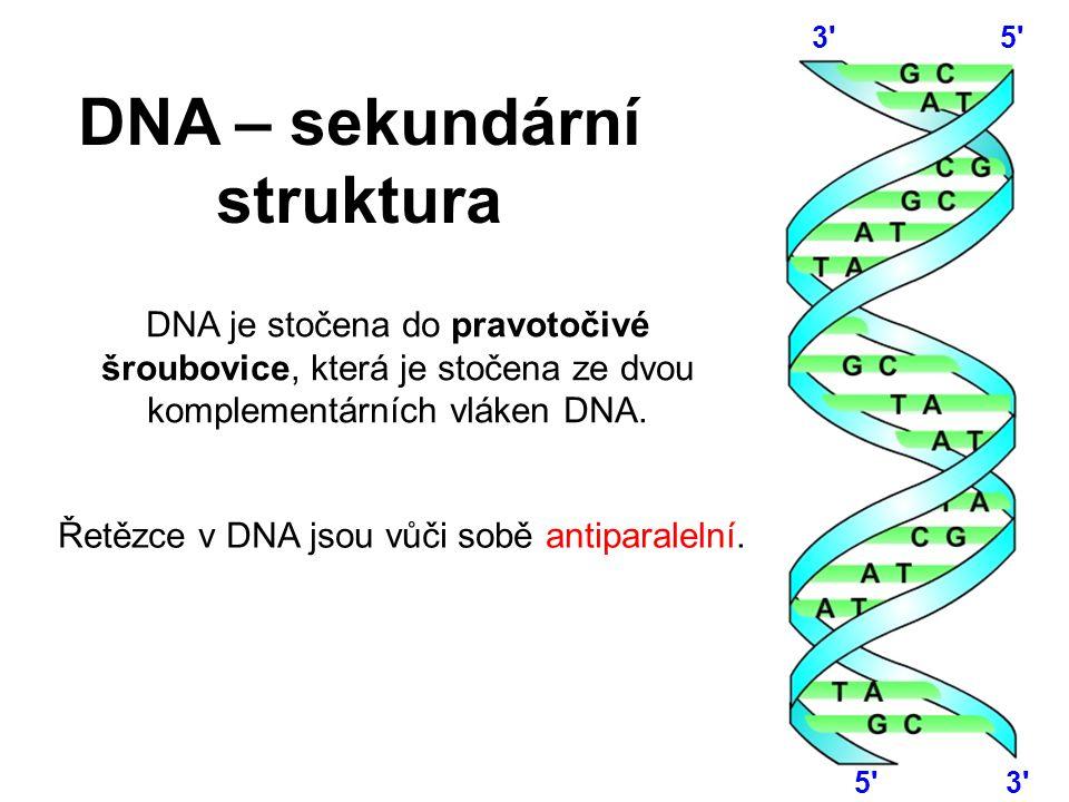 DNA je stočena do pravotočivé šroubovice, která je stočena ze dvou komplementárních vláken DNA. Řetězce v DNA jsou vůči sobě antiparalelní. 5' 3' DNA