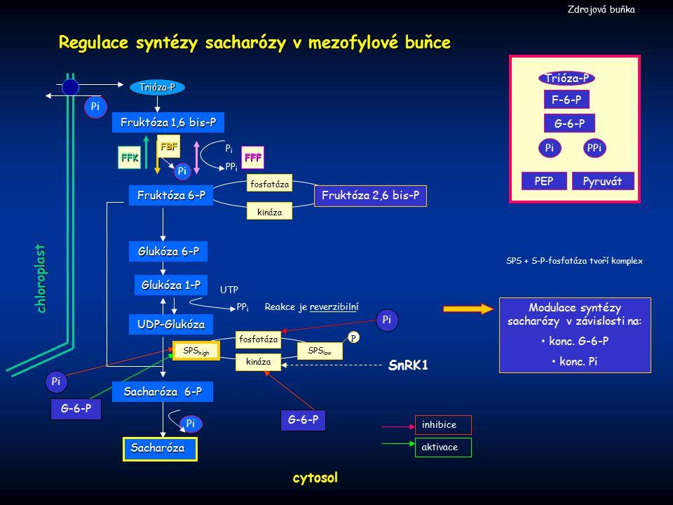 Regulace syntézy sacharózy v mezofylové buňce cytosol Zdrojová buňka Reakce je reverzibilní chloroplast Trióza-P Pi Fruktóza 1,6 bis-P Sacharóza Glukó