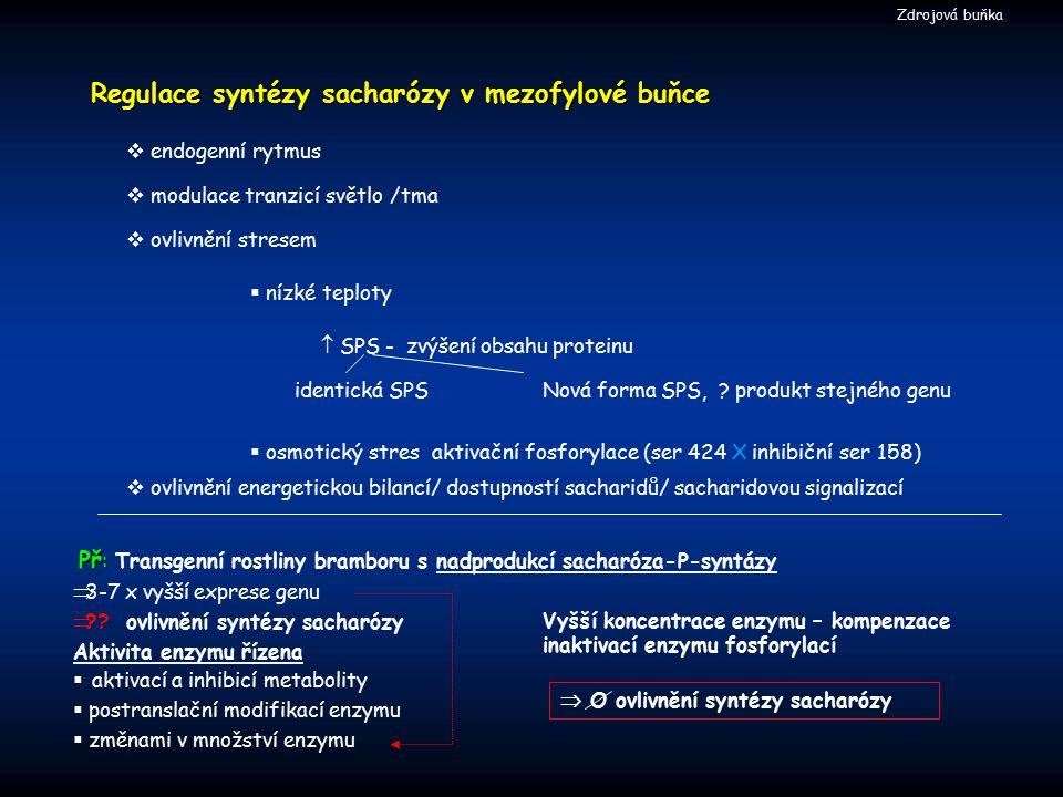 Regulace syntézy sacharózy v mezofylové buňce Nová forma SPS, ? produkt stejného genu  endogenní rytmus  SPS - zvýšení obsahu proteinu identická SPS