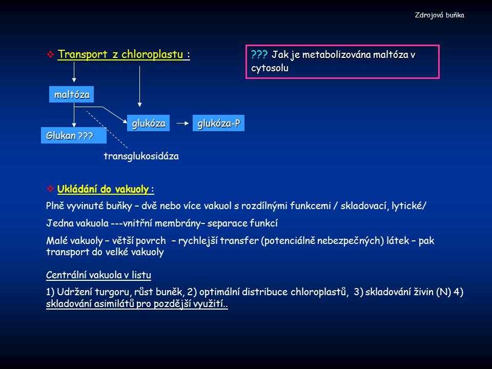 transglukosidáza  Transport z chloroplastu : Glukan ??? Jak je metabolizována maltóza v cytosolu ??? Jak je metabolizována maltóza v cytosolu glukóza