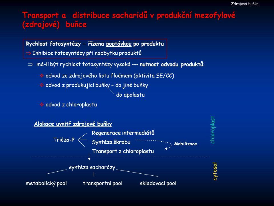 Transport a distribuce sacharidů v produkční mezofylové (zdrojové) buňce Rychlost fotosyntézy - řízena poptávkou po produktu  Inhibice fotosyntézy př