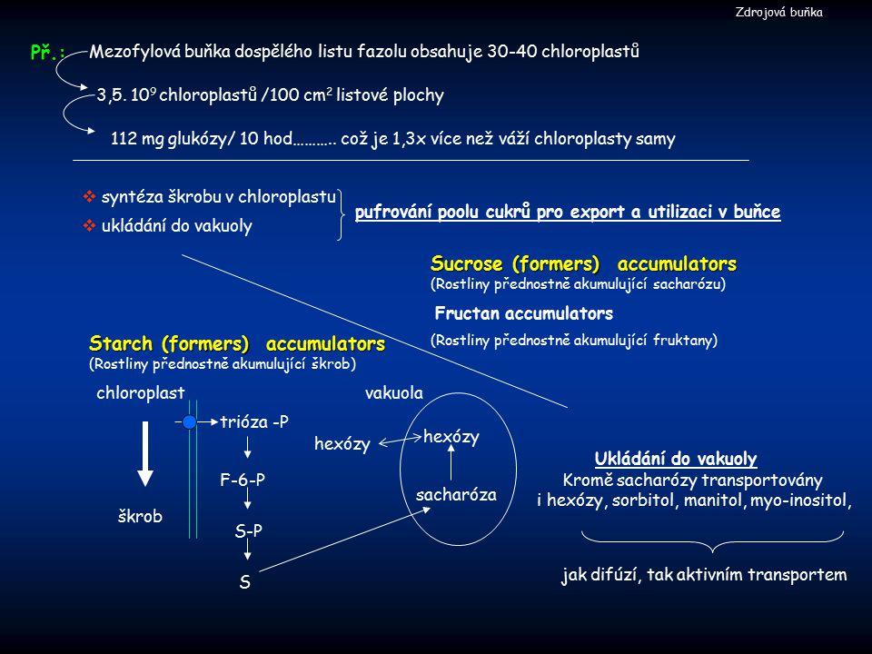 Rozdělování trióza-P mezi chloroplast a cytosol Priorita: udržení konstantního toku asimilátů Fruktóza 1,6 bis-P ADPG Calvinův cyklus Trióza-P PiPi Sacharóza 6-P PiPi PiPi PiPi Škrob Sacharóza Fruktóza 6-P UDPG Zdrojová buňka