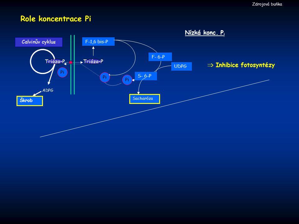  Inhibice fotosyntézy Nízká konc. P i Role koncentrace Pi F-1,6 bis-P ADPG Calvinův cyklus Trióza-P S- 6-P Škrob Sacharóza F- 6-P UDPG Pi Zdrojová bu
