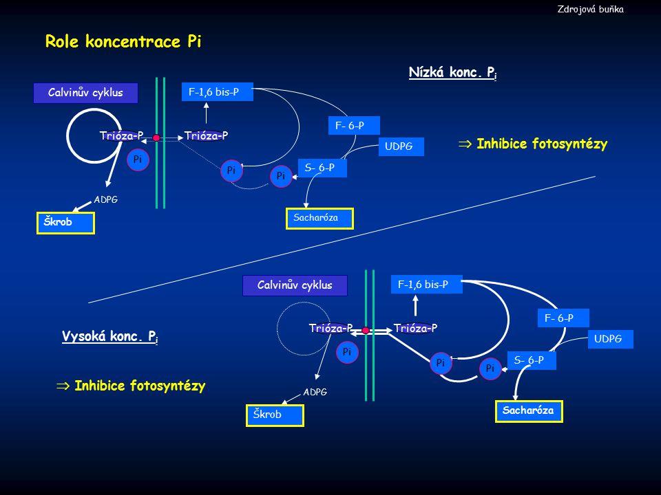  Inhibice fotosyntézy Vysoká konc. P i Nízká konc. P i Role koncentrace Pi F-1,6 bis-P ADPG Calvinův cyklus Trióza-P S- 6-P Škrob Sacharóza F- 6-P UD