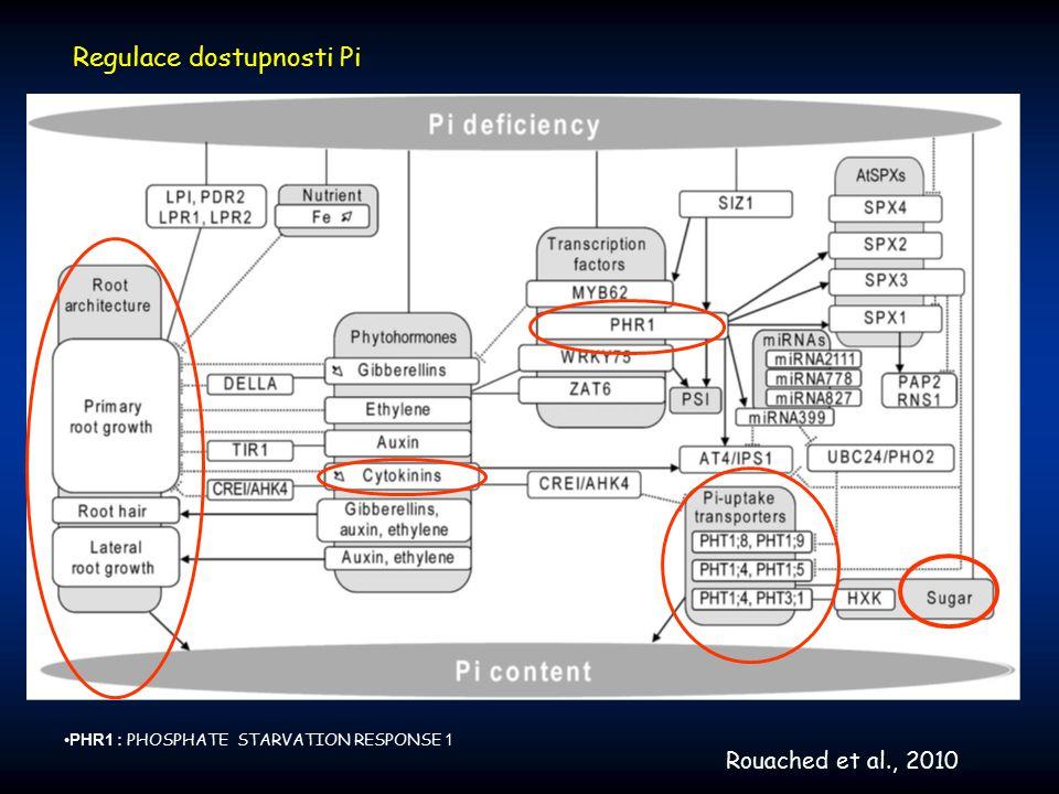 Transport asimilátů z chloroplastu u Arabidopsis Zdrojová buňka pGlcT Mex1 TPT Možnost kompenzace nedostatečnosti jednotlivých transportních komponent – vysoká Rozdíly v reakcích různých rostlin : sucrose X starch accumulators Cho et al., 2011