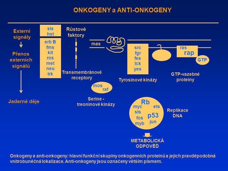 ONKOGENY a ANTI-ONKOGENY Externí signály Přenos externích signálů Jaderné děje Růstové faktory Transmembránové receptory Tyrosinové kinázy GTP-vazebné