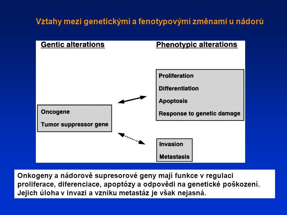 Vztahy mezi genetickými a fenotypovými změnami u nádorů Onkogeny a nádorově supresorové geny mají funkce v regulaci proliferace, diferenciace, apoptóz