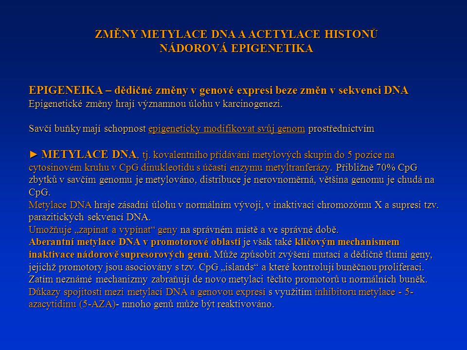 ZMĚNY METYLACE DNA A ACETYLACE HISTONŮ NÁDOROVÁ EPIGENETIKA EPIGENEIKA – dědičné změny v genové expresi beze změn v sekvenci DNA Epigenetické změny hr