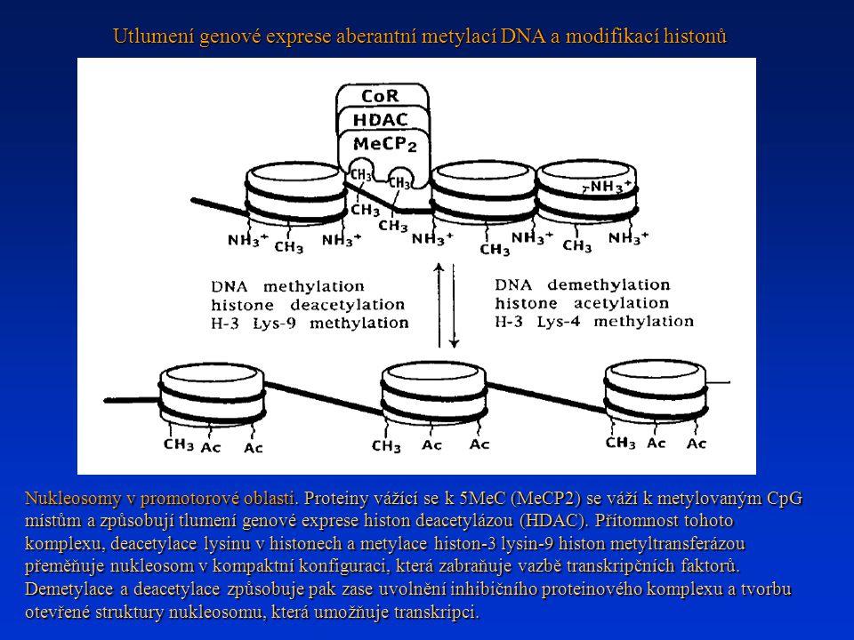 Utlumení genové exprese aberantní metylací DNA a modifikací histonů Nukleosomy v promotorové oblasti. Proteiny vážící se k 5MeC (MeCP2) se váží k mety