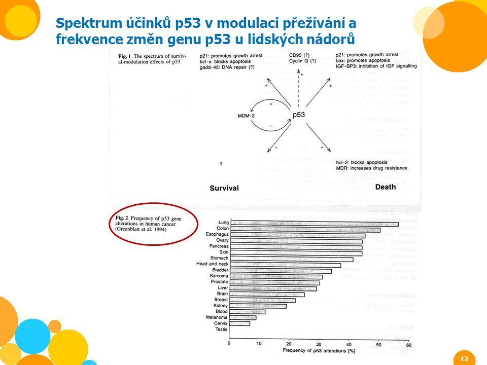 Spektrum účinků p53 v modulaci přežívání a frekvence změn genu p53 u lidských nádorů 12