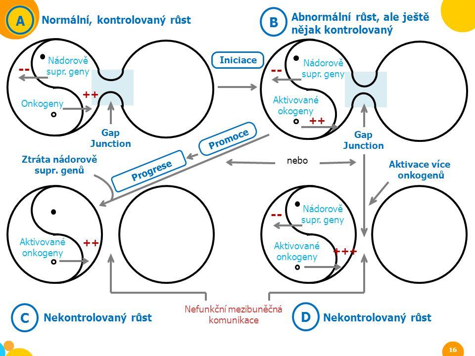 Gap Junction -- A Normální, kontrolovaný růst Nádorově supr. geny Onkogeny ++ B Abnormální růst, ale ještě nějak kontrolovaný Nádorově supr. geny Akti
