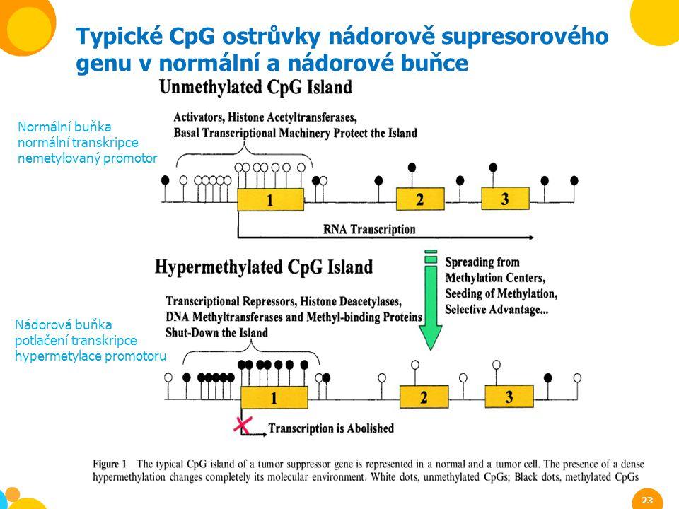 Typické CpG ostrůvky nádorově supresorového genu v normální a nádorové buňce Normální buňka normální transkripce nemetylovaný promotor Nádorová buňka
