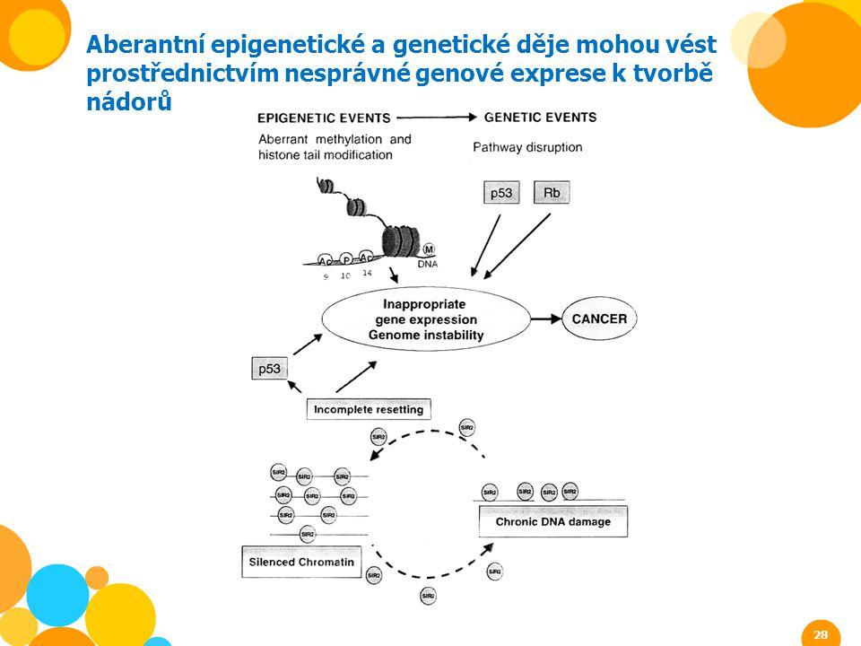 Aberantní epigenetické a genetické děje mohou vést prostřednictvím nesprávné genové exprese k tvorbě nádorů 28